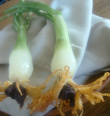 Noma Snack 5: Prženi luk koji se umače u sosu od morskih plodova u kojem su i dagnje
