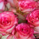 Kako da vam život bude hod po ružinim laticama, a ne po trnju?
